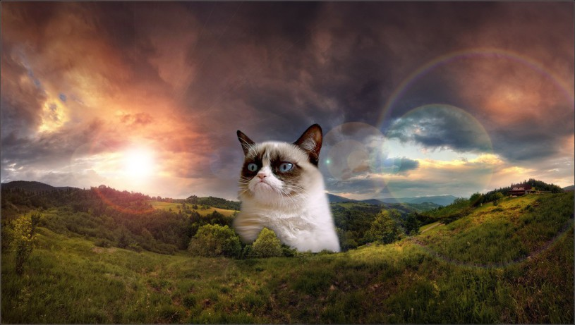Funny-Grumpy-Cat-Images-HD-Wallpaper